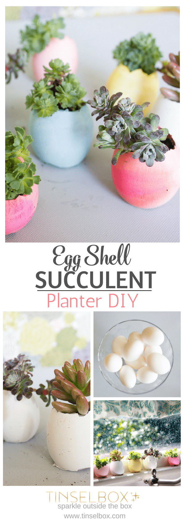 Egg Shell Succulent DIY Planter