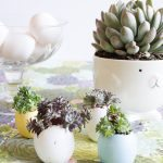 Egg Shell Succulents | DIY