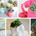 "20 Succulents ""in Things"" - Best of Pinterest"