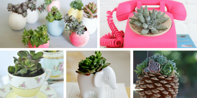 Best of Pinterest Succulents in Things