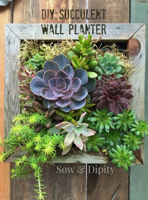 20 succulents in things   best of pinterest   tinselbox