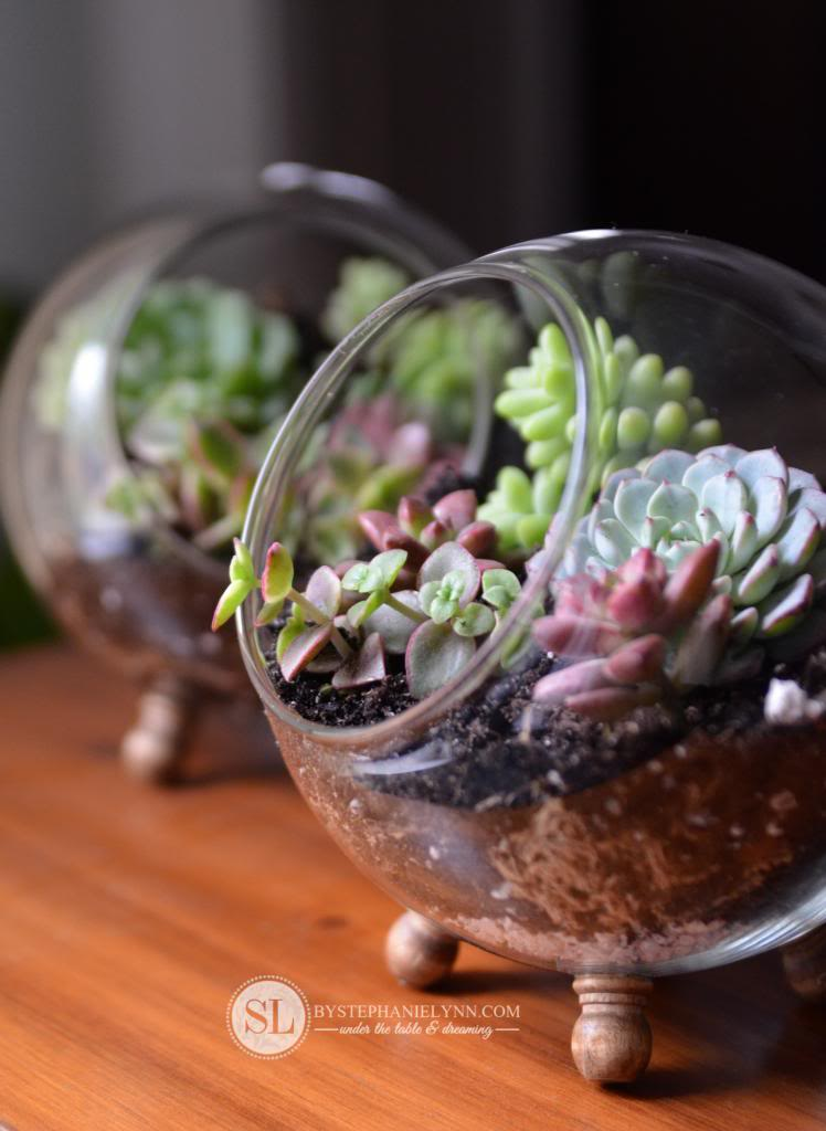 "20 Succulents ""in Things"" - Best of Pinterest - TINSELBOX"