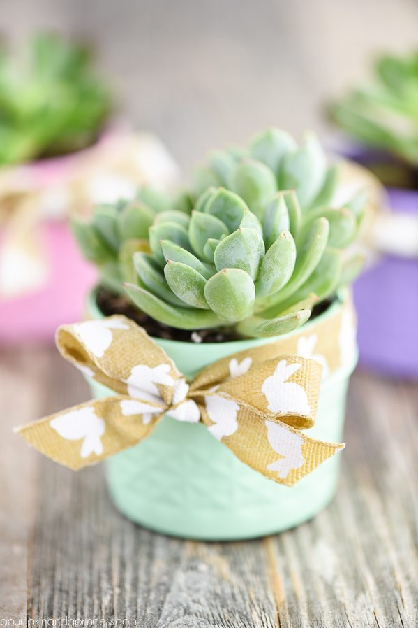 20 Succulents Quot In Things Quot Best Of Pinterest Tinselbox