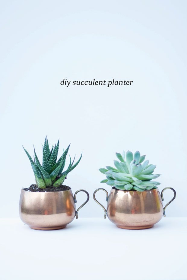 20 succulents  u0026quot in things u0026quot  - best of pinterest