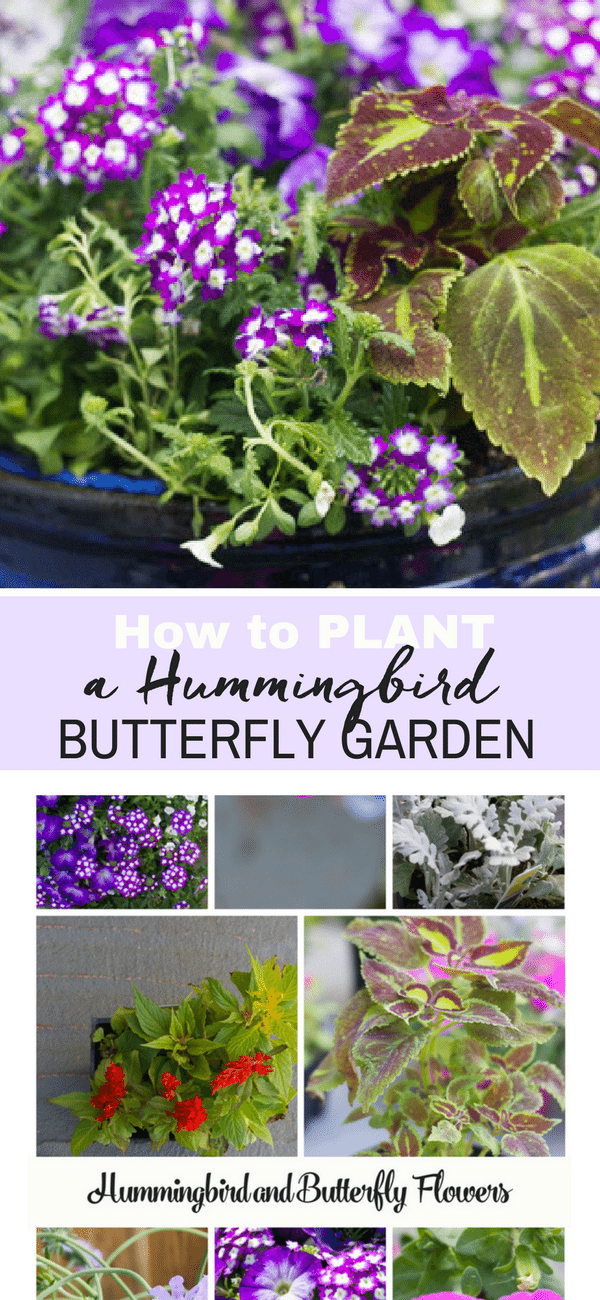 How to plant a beautiful butterfly and hummingbird garden.  It's all in the plants, and we have a long list of plants which butterflies and hummingbirds love.  If you love gardening you will want to pin this list.