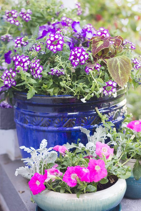 How To Create A Lovely Butterfly And Hummingbird Garden